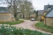 Daffodils in Fulwell