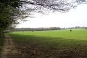 Near Bibbsworth Hall Farm