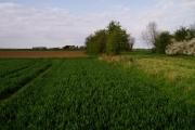 Farmland near Punch Farm, Landbeach