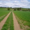 Farm track near Radwinter