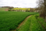 Wheat and oilseed rape, near Wimbish