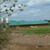 Chicken Farming, Alderholt
