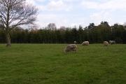 Farmland at Farnham Royal