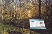 Hazel in Wallis Wood Nature Reserve.