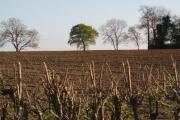 Farmland near Husbands Bosworth