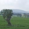 Farmland, Easter Kinleith