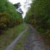 Brentmoor Heath, Westend Common