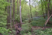 Stream in the woods, with bluebells