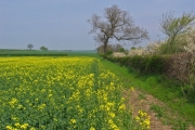 Farmland north of Kilham