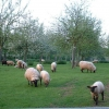 Tillington Common