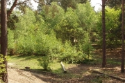 Sandpit area of Horsell Common