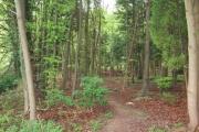 Footpath into the woods, Halton