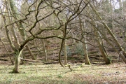 Unmanaged woodland, Hurtmore, Shackleford