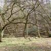 Unmanaged woodland, Hurtmore, Shackleford