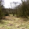 Woodland glade, Hurtmore Bottom, Shackleford