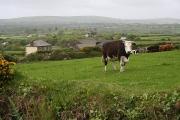 Chyreen Farm