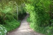 Woodland path near Tirley Farm, Utkinton.