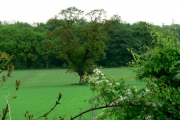 Farmland, Everthorpe