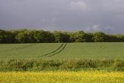 Farmland near Popley