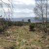 Forestry plantation