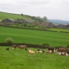 Gorse Bank Farm and residents