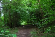 Laughton Common Wood