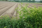 Farmland near Snape