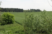 Manton Wood