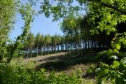 Woodland near Polborder