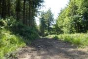 Woodland track near Polborder