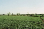 Field of crop south east of Rode, Wiltshire