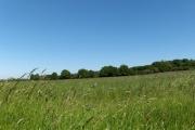 Farmland near Long Wittenham