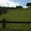 Sheep and their wool on Nutcombe Farm