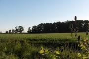 Farmland, Clifton Hampden