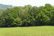 Woodland along the shores of Weir Wood Reservoir
