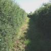 Bridleway off A329