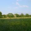 Meadow near Wigginton