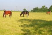 Horses at Washmere Green