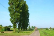Lombardy poplars at Washmere Green