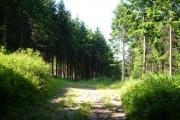 Storridge Wood