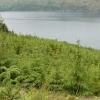 Woodland west of Eilanreach