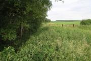 Broom Hill Wood