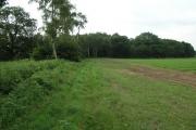 Law Hill Wood