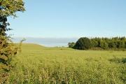 Fields by Viewforth Plantation