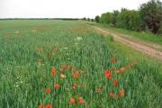 Farmland South of Tickton.