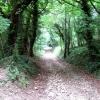 Bridleway to Slad