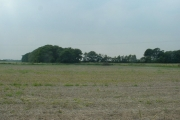 Rossall's Wood