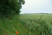 Farmland North of Rudston