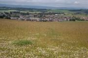 Clover field at Pitreuchie