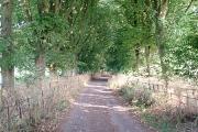 Trackway to Stinchcombe hill